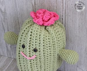 Rosie the Plushy Cactus with a top view of flower.
